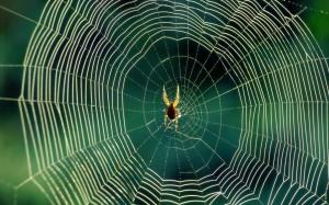 teia-de-aranha
